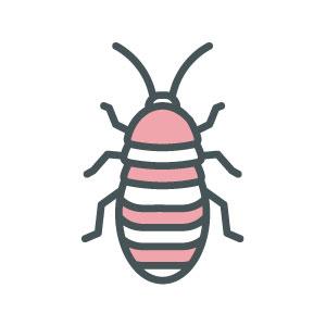 ASW-Pest-Control-Specialists_Trowbridge_Cockroaches