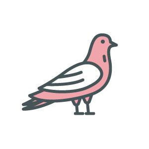 ASW-Pest-Control-Specialists_Trowbridge_Ferral-Pigeons