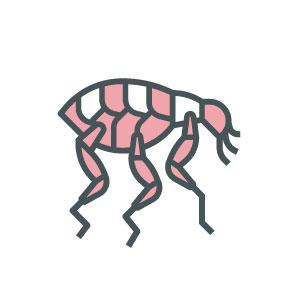 ASW-Pest-Control-Specialists_Trowbridge_Fleas-2