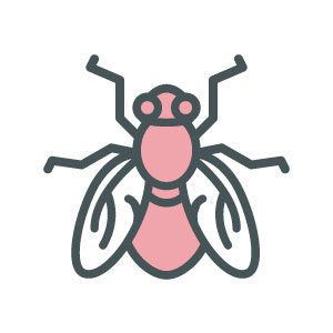 ASW-Pest-Control-Specialists_Trowbridge_Flies control and prevention