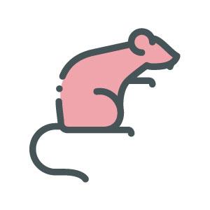 ASW-Pest-Control-Specialists_Trowbridge_Rats