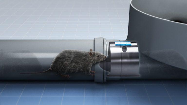 ASW-Pest-Control-Specialists_Trowbridge_avon somerset wiltshire rat problems